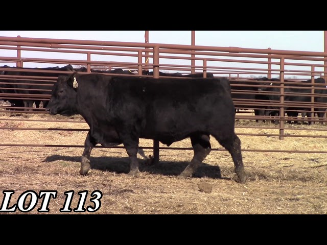 Mead Angus Farms Lot 113