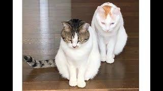 【面白】「この愛くるしい姿をみよw」動物たちの可愛い行動に和んで癒...