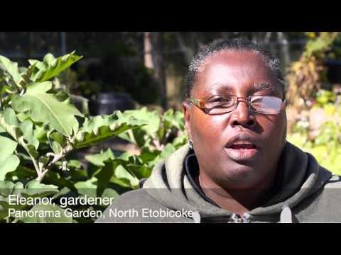 Growing Leadership: Toronto community gardeners on building involvement