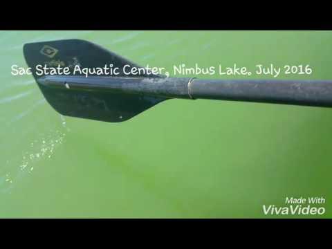 Sac State Aquatic Center, Nimbus Lake July 2016