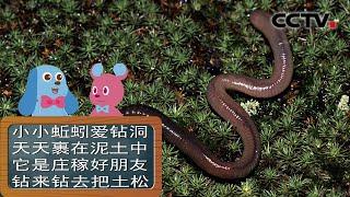 《道哥和摩尔》蚯蚓喜欢吃什么东西?| CCTV少儿