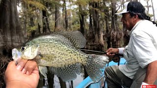Single Pole Crappie Fishing!