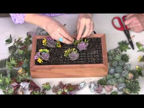 Create A Living Picture With Succulents
