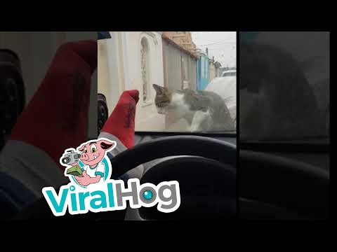 Man Scares Cat, Instant Karma Ensues || ViralHog