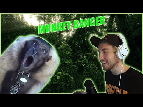 Turning A Monkey Into Trap Music