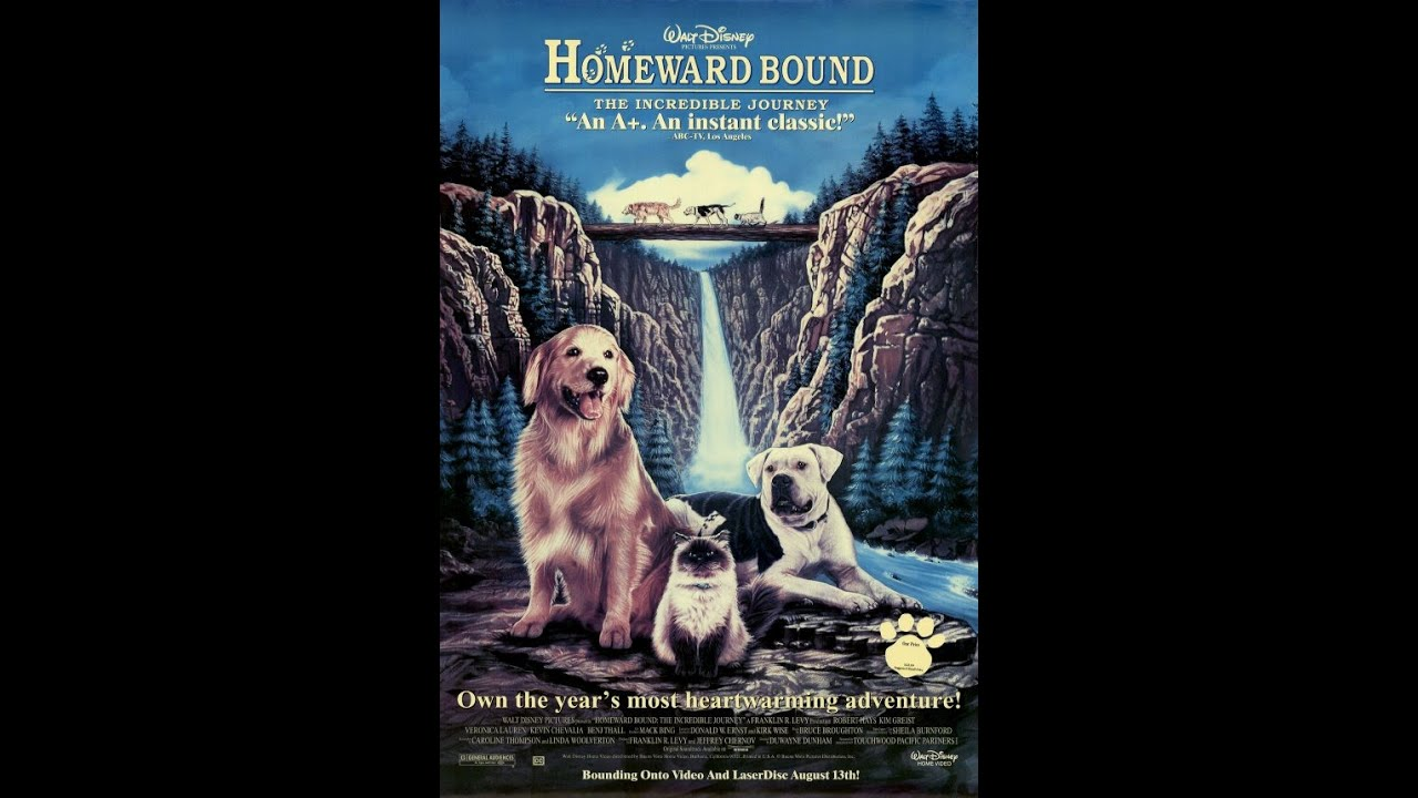 Image result for Homeward Bound: The Incredible Journey (1993)