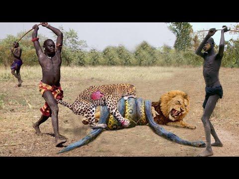 Top 10 Strongest Predators In The Wild - Prey VS Predator - Predator Animals Real Fights to Death
