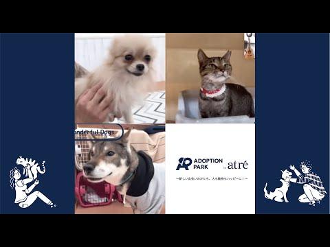 兵庫 保護 県 犬