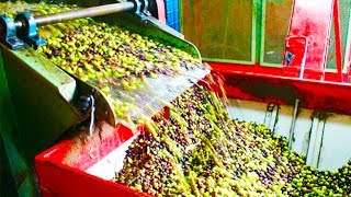 Top 10 Untold Truths of Olive Oil