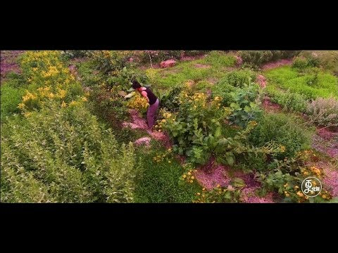 The Botanist Build a Herb Garden in Beijing to Memorize His Daughter | More China