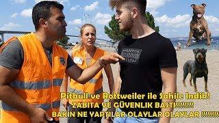 Sahil'de Amstaff ve Rottweiler Gören Zabıtalar Bakın Ne Yaptı - Zor Anlar Yaşadık!!!!