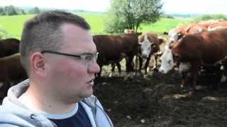 Hodowla bydła mięsnego rasy Hereford