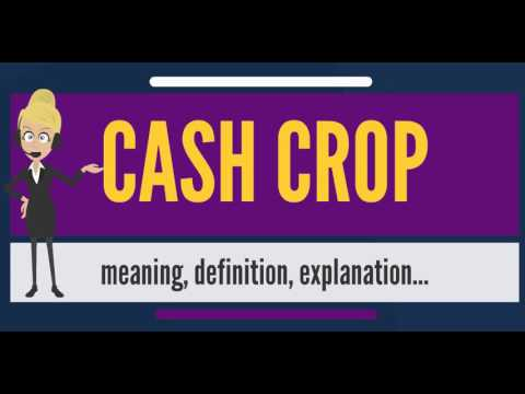 What Is Cash Crop What Does Cash Crop Mean Cash Crop Meaning