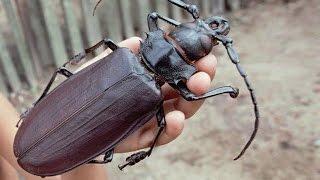 Топ 5 - Самых больших насекомых в мире
