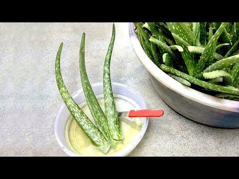 Remove poison from aloe vera | Use aloe vera properly