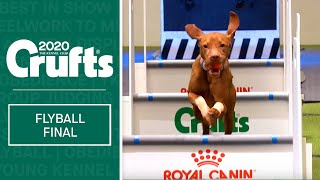 Flyball  Team Final | Crufts 2020