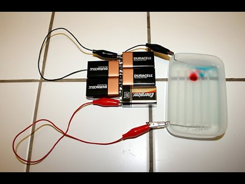 Gel Electrophoresis and Forensic Science: Biotechnology Science Fair Project