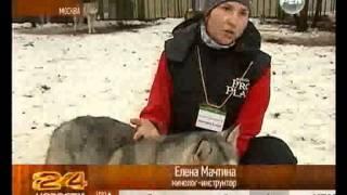 Собаки Хаски лечат детей-инвалидов