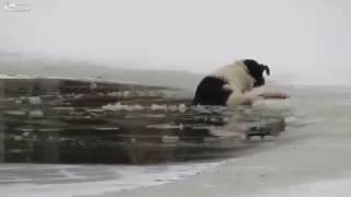 Как мужик собаку спасал