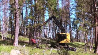 Bull Creek Forestry: Tigercat LH822C harvester