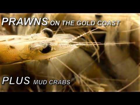 Prawning And Mud Crabs (Saltworks Jumpinpin)