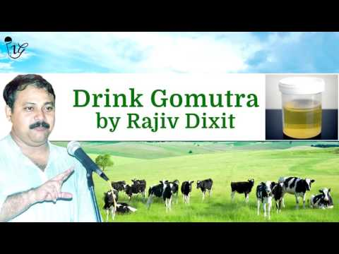 गौमूत्र के फायदे by राजीव दिक्षित | Benefits Of Cow Urine (Gomutra) by Rajiv Dixit