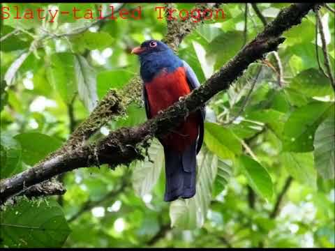 Some of the Best Birds in Panama