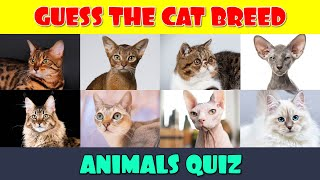 Cat Breeds Quiz | Guess the Cat Breed | Cats Quiz Game | Animal Quiz