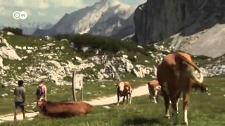 Los Alpes Bávaros: de cima a cima | Destino Alemania