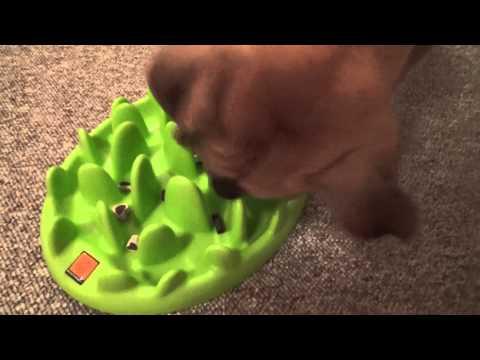 Spike testet Green Mini von Northmate