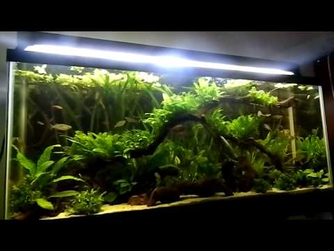 Fish tank question what filters do you have youtube for Fish tank riddle