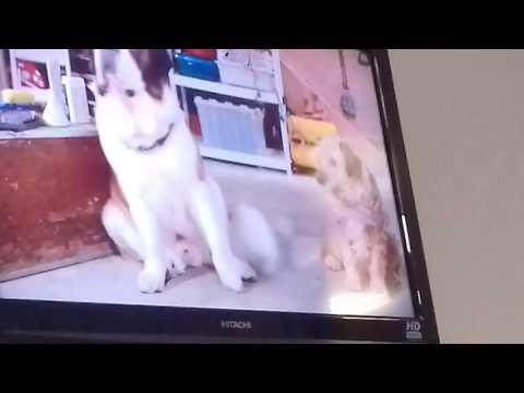 Beethoven burps & farts scene(2)
