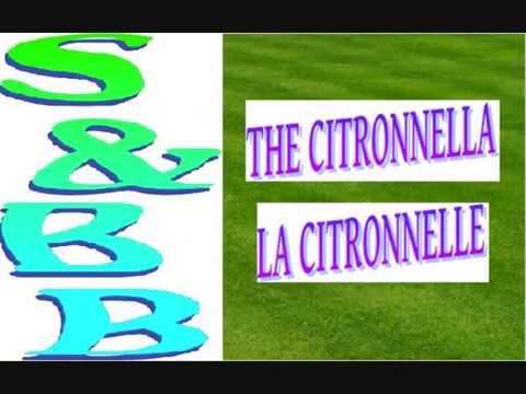 CITRONNELLE  01 (LEMONGRASS 1) : Plante Magique