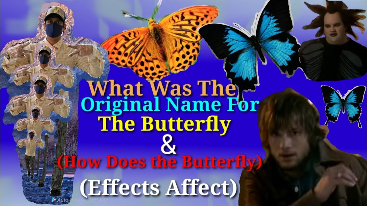 What Was The Original Name For The Butterfly & (How Does The Butterfly effects affect People?)
