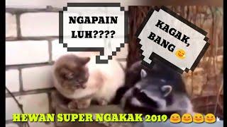 """NGAKAK 100%?!!!!!!!!! KUMPULAN VIDEO LUCU HEWAN TERBARU 2019 VERSI """"CUTE ANIMALS"""""""