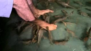 when fish attack singapore