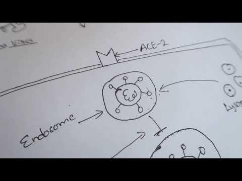 zinc-ionophores:-chloroquine-and-hydroxychloroquine