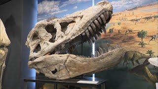 モンゴルのゴビ砂漠などで恐竜研究を進めている岡山理科大学が学内の恐竜学博物館をリニューアルし、報道関係者に公開しました。