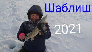 озеро Шаблиш рыбалка в 2021 году жор щуки ловля на жерлицы и безмотылки