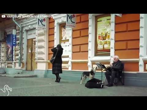 Talented Dog Sings Along With Street Performer