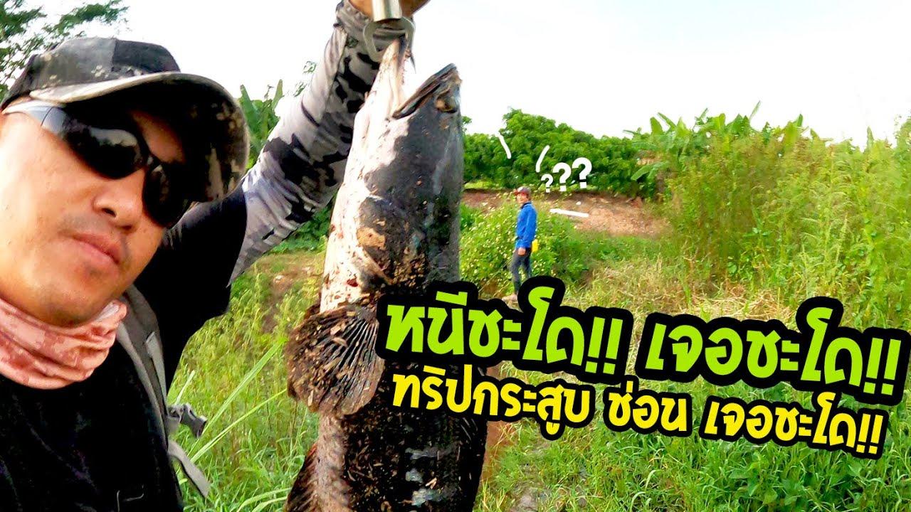 เข้าหมายปลากระสูบ ปลาช่อน เจอชะโด!! ไปไหนก็เจอชะโด!! (นักล่าชะโด)