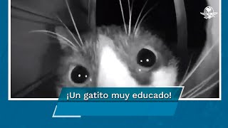 Gato toca timbre de la puerta de su casa y video se hace viral