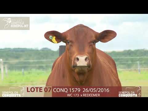 LOTE 07 CONQ 1579