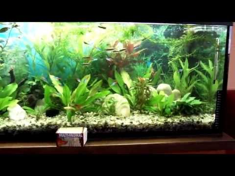 Akvarium a použití CO2- 2