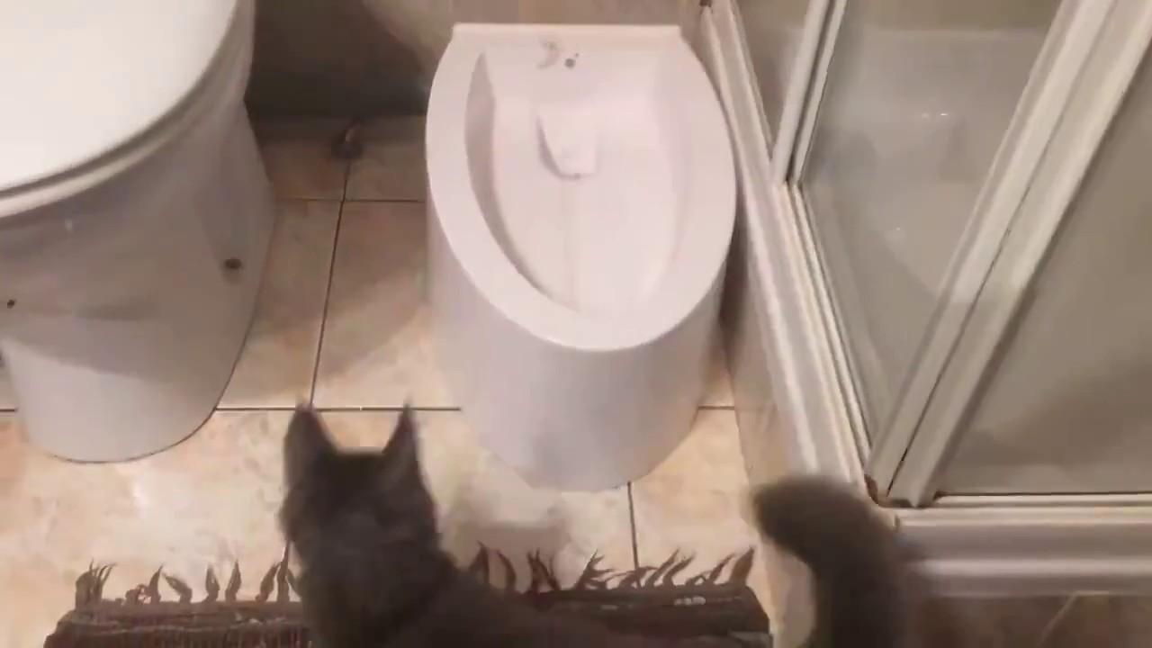 26 моделей лотков, туалетов и аксессуаров для кошачьих туалетов в наличии, цены от 30 руб. Купите товары для содержания и ухода за кошками с бесплатной доставкой по ростову в интернет-магазине дочки-сыночки. Постоянные скидки, акции и распродажи!