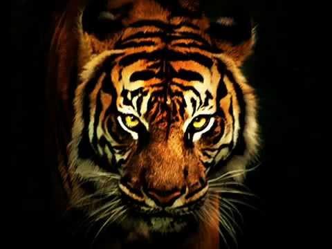 Survivor - Eye Of The Tiger (HD)