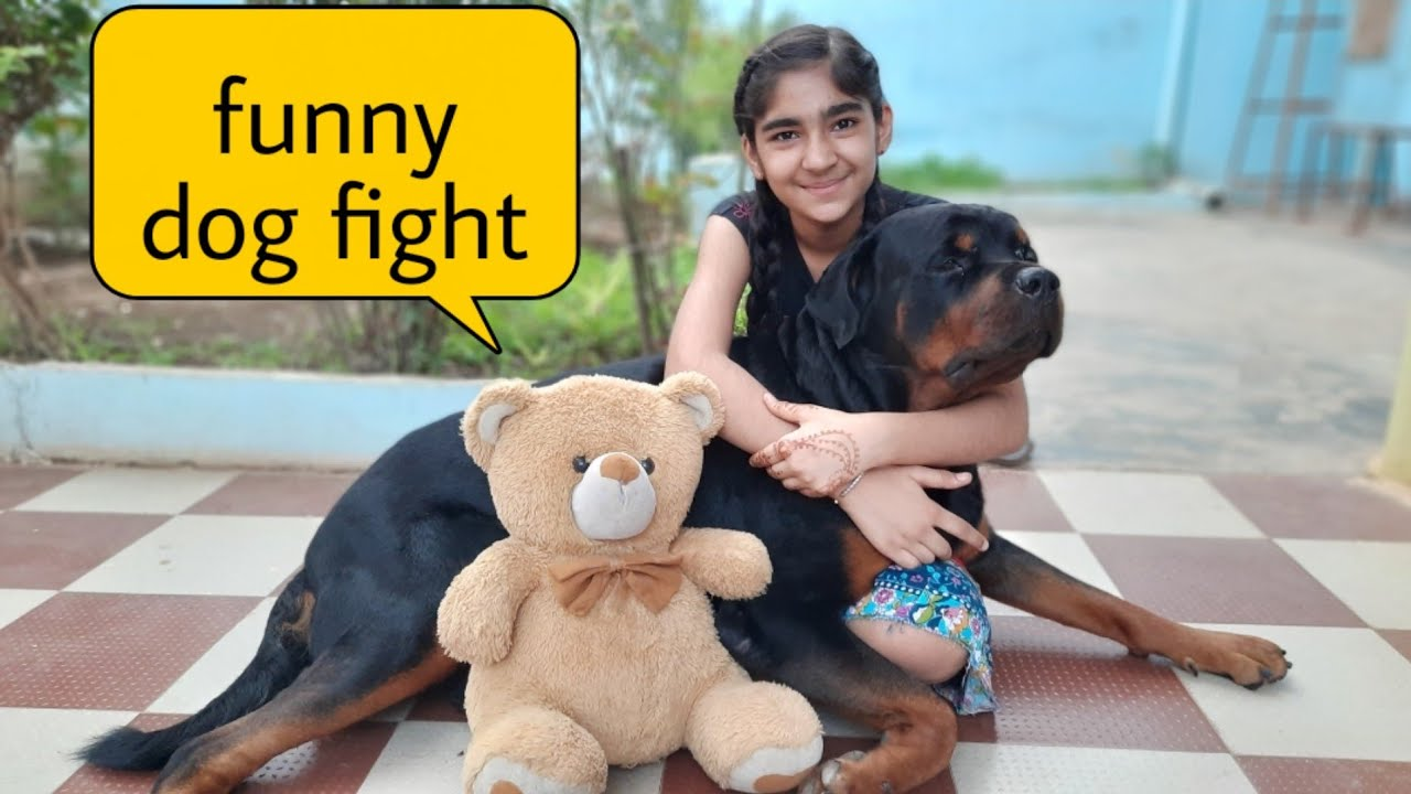 my dog is fighting with anshu|| funny dog video|| cute dog video.