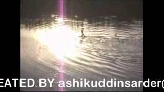 King cobra sex in water
