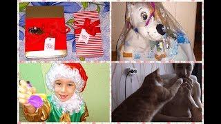 VLOGMAS: Смешные моменты декабря и вкусные подарки