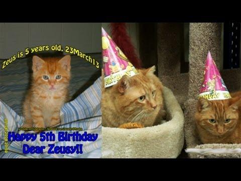 Cats celebrate Birthday at PetSmart